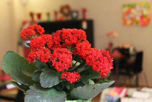 fiori primavera bouganville